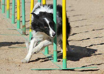 adiestramiento-canino[1]